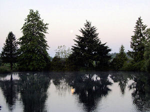 Loch Lolly Photo- Trees Across Pond